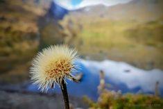 Eiger-Panoramaweg: von Grindelwald-First via Bachalpsee zur Bussalp Eiger North Face, Swiss Alps, Switzerland, Trail, Hiking, Europe, Plants, Den, Holiday Destinations