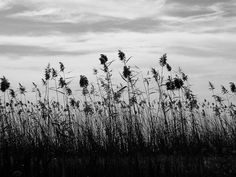 albufera 2, via Flickr.