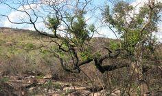 Mudanças climáticas e mau uso do solo ameaçam nascentes da Chapada Diamantina