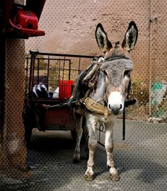 While filming for a TV special, celebrity chefs, Gordon Ramsay, Gino D'Acampo, and Fred Sirieix forced a small struggling donkey to pull all their weight. Scottish Recipes, Turkish Recipes, Ramsay Chef, Gino D'acampo, Romanian Food, Romanian Recipes, Astrology Taurus, Gordon Ramsey, Korean Food