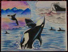 Endangered Species Day art contest 3-5 grade category semi-finalist: Matthew Liu, Age 9, Orca