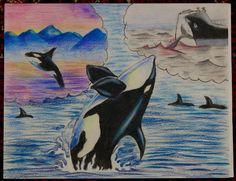 Endangered Species Day art contest 3-5 grade category semi-finalist: Matthew Liu, Age 9, Orca
