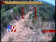Coolies seen carrying Red Sanders logs before Chittoor Encounter - Tv9 Exclusive
