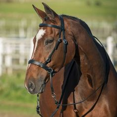 Bitless Bridle Sidepull Natural Horsemanship Haute Qualité Custom Made UK