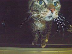 Cats, Life, Animals, Gatos, Animales, Animaux, Animal, Cat, Animais