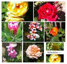 Floral Collage Shower curtains #yogamats #fleeceblankets #christmasisclose @florist