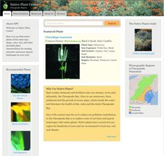 Image and link to the Native Plant Center, an online database for native plant withing the Chesapeake Bay Watershed.