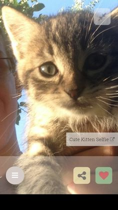 Get our #awwcuteapp from your appstore buff.ly/2bYpiOG for more #awws   http://ift.tt/2bpCc61