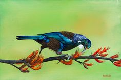 Tui 2016 by Robyn Hall New Zealand Artist, Original framed, also available as prints on canvas and paper. Painted with permission from photo by Martin Tonks. New Zealand, My Arts, Birds, Canvas Prints, Artists, Tattoo, The Originals, Paper, Kitchen