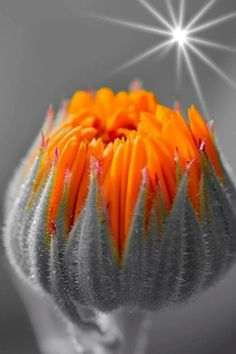 touchn2btouched, orange and grey, flower