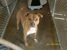 ADOPTED!  Hero URGENT!!!! EUTH LIST THURS!!!!!! is an adoptable Pit Bull Terrier Dog in Lebanon, KY. He is looking for his forever home!! For more information on any of our animals listed please contact the Mar...