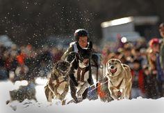 Aviemore Husky Sled Dog Rally