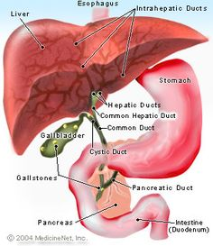 Picture of the Liver and Hepatic Ducts http://www.onhealth.com/primary_sclerosing_cholangitis/article.htm