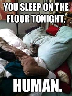 Check out: Animal Memes - You sleep on floor. One of our funny daily memes selection. We add new funny memes everyday! Bookmark us today and enjoy some slapstick entertainment! Funny Animal Pictures, Funny Animals, Cute Animals, Funny Photos, Animal Funnies, Hilarious Pictures, Cute Animal Humor, Jokes Photos, Funniest Animals