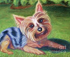 """D. Renée Wilson  """"Yard Yorkie""""  original Pawtrait commission, 2012  A portion of all Pawtrait print and card sales go to a local pet rescue shelter. Click on image to visit site :)"""