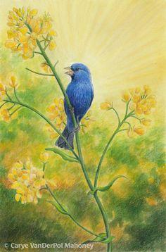 "Bluebird singing in a field of yellow mustard - Original Art - ""The Bluebird of Happiness"""