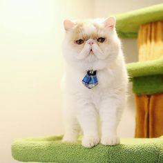 ... Pancake/Mochi/Moo Moo The Cats on Pinterest | Persian Kittens, Mochi