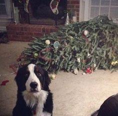 perros a los que no les gusta la navidad