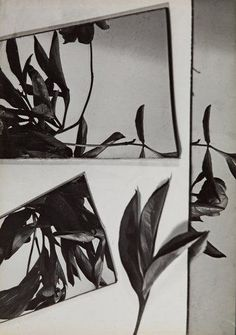 Florence Henri, Still Life Composition, 1931.  - #style #photography #photo #photographer #photoshoot #nature #flower #plant #stilllife #stilllifephotography #beauty #fashionphotography #BnW #bw #blackandwhite #blackandwhitephotography #ohgoodgoods #stylish #cool #visual #contemporaryphotography #shop #studio #shoppingonline #onlinestore #details #abstract #art #artist #creative #concept #conceptphotography