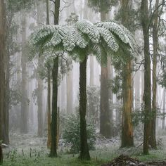 Bushland is covered with a white dusting during the early stages of a snow storm at Mt Dandenong, Victoria. Picture by David Jones
