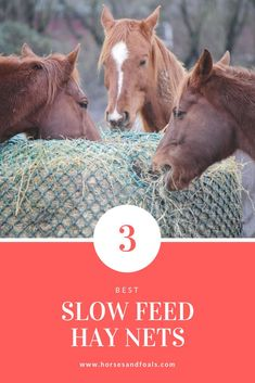 Looking for the best slow feed hay net on the market in Here are 3 top rated slow feed hay nets for horses that you can buy online today. Horse Hay, Horse Feed, Horse Barns, Horses, Horse Care Tips, Natural Horsemanship, Horse Training, Shell, Ranch Life