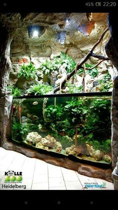 Fucking fuck yes!Would love to have this in my aquarium in my house! Terrariums, Aquarium Terrarium, Reptile Terrarium, Nature Aquarium, Planted Aquarium, Aquarium Design, Reef Aquarium, Aquarium Fish Tank, Fish Tanks
