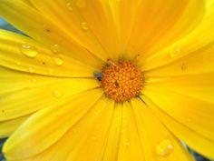 Moois van ' M(i)e': de mooiste foto's uit mijn tuin - april 2014
