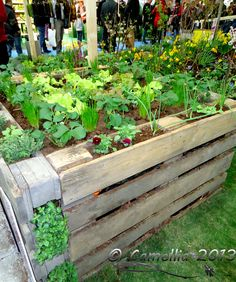 Great idea but I would cut the pallets in half first to make a shorter bed and waste less dirt.