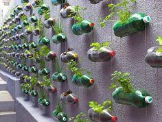 Make your own garden using plastic bottles.