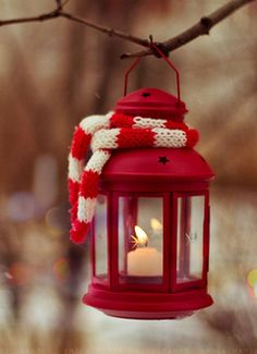 <3 This is a beautiful piece of photogrpahy. The bright red and the snowy back ground, with the candle light. Perfection.
