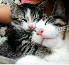 Cute Cats And Kittens, Cool Cats, Kittens Cutest, Funny Kittens, Pretty Cats, Beautiful Cats, Animals Beautiful, Cute Baby Animals, Animals And Pets
