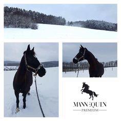 Kuka is enjoying the snow! Wonderful morning up the hills at Gazdovstvo Uhliska! Winter Snow, Squares, Horses, Instagram Posts, Fun, Animals, Animales, Bobs, Animaux