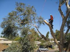 Get Reliable Tree Removal Service in Melbourne