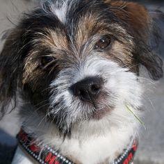 heididahlsveen:  I am giving you my velvet look #atsjoo #puppy #valp #dog #hund #mixed