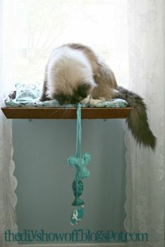 DIY cat perch