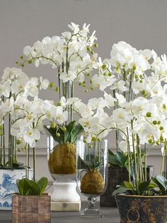 Gorgeous Orchid Arrangements Ideas To Enhanced Your Home Beauty : Gorgeous Orchid Arrangements Ideas To Enhanced Your Home Beauty 31 Orchid Flower Arrangements, Orchid Planters, Orchid Centerpieces, Orchid Pot, Orchids Garden, Flowers Garden, Silk Orchids, Phalaenopsis Orchid, Orchids In Water
