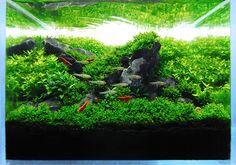 Nano Rock Garden [1g] - Page 2 - The Planted Tank Forum