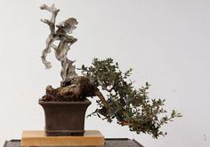 Bonsallal年4: Espontaneidad, madera y bonsái