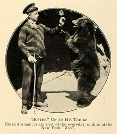 Buster (?) at the Bronx Zoo - The bear is Buster! Buster Keaton did not perform at the Bronx Zoo!