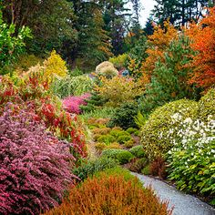 Planting for fall color