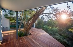 Angled deck with enclosed tree, outlook over Victorian bushland. Beach house alterations designed by Sketch Building Design