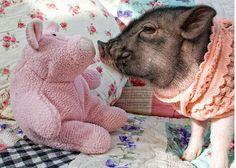 Best Friends, Pot belly Pig,Pig photo, small space art, gift, pet humor, wall art, home decor,  anim