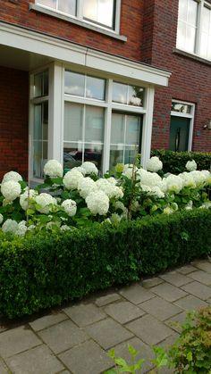 backyard designs – Gardening Ideas, Tips & Techniques Incrediball Hydrangea, Heather Gardens, Park Ridge, Backyard, Patio, Hair And Beard Styles, Beautiful Gardens, White Flowers, Landscape