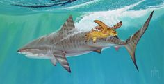 "Guy Harvey Featured in ""Art and the Animal"" Exhibit at College of C. Florida's Appleton Museum of Art Fishing Magazines, Underwater Painting, Wild Creatures, Ocean Art, Ocean Life, Fish Art, Wildlife Art, Marine Life, Guys"