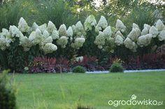 Mój skromny ogród - strona 397 - Forum ogrodnicze - Ogrodowisko