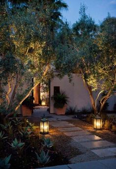 Comment planter un olivier en pot ou en pleine terre? Fiche et faits curieux - Backyard Lighting, Outdoor Lighting, Pathway Lighting, Entry Lighting, Ceiling Lighting, Garden Lighting Ideas, Lighting Cable, Garden Ideas, Garden Inspiration