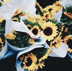 flowers, sunflower, and yellow image May Flowers, Beautiful Flowers, Flowers Nature, Exotic Flowers, Purple Flowers, Plants Are Friends, Planting Flowers, Flowers Garden, Flower Arrangements