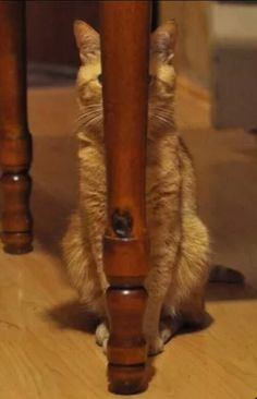 Hahaha! My cat does stuff like this, just because she can't see me doesn't mean I can't see her!