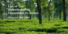 Tea Manufacturing Companies in Assam