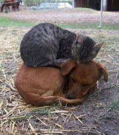 Cat and dog bunk bed • orig. source not found